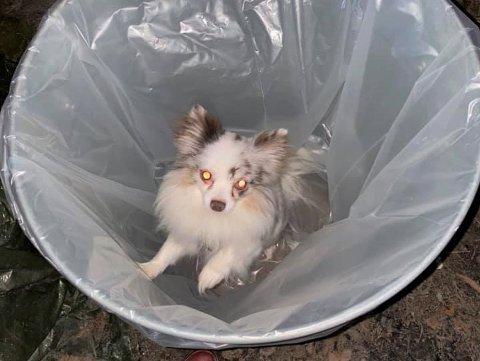 Denne lille hunden ble kastet i en søppelbøtte da reven kom truende imot.