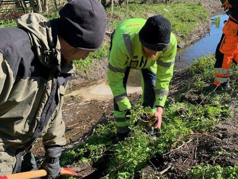 HALVVEIS: Fasvo er ferdig med å plante trær på den ene siden av Slevikbekken. I høst skal det plantes 305 trær på dem andre siden.