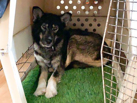 HJEMME: Hunden Teddy er endelig tilbake hos matmor Anette Seljevold etter å ha vært på rømmen i flere dager.