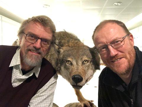 Jan Ingar Båtvik og Rune Aae ved HiØ er glade for at økonomisk støtte fra Halden kommune har gjort at de kan bruke en utstoppet ulv i undervisningen på HiØ.