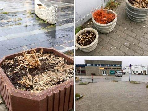 FJORÅRETS PLANTER: Det er mye ugress og gamle planter som dominerer i Lakselv sentrum. Nå skal frivillige krefter gjøre noe med dette.