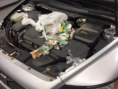 ROTTEREIR: Slik så det ut i motorrommet etter at Marit Haukom tok bilen sin i bruk etter to måneder.