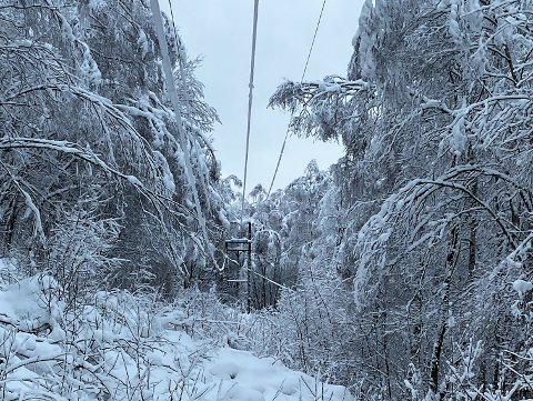TUNG SNØ: Sånn ser det ut på Veset nå. Snøen ligger tung på trærne, og synker ned på høyspentlinja.