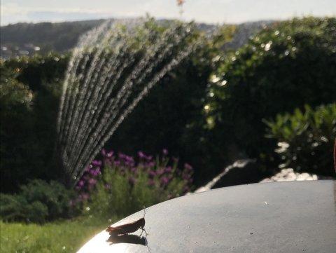 FORBUDT: Fra tirsdag 16. juni må du koble ut vannsprederen. Arkivfoto: Lily Marcela Dam