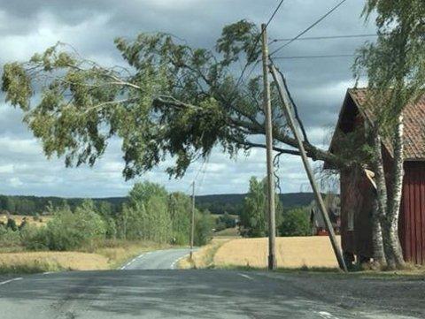 TOK LINJER: Vinden fredag fikk massive følger for strømnettet i distriktet.