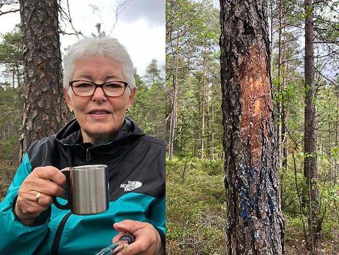 SKÅRET VEKK? Ellinor Bjørndalen observerte at mange trær hadde lite merking.