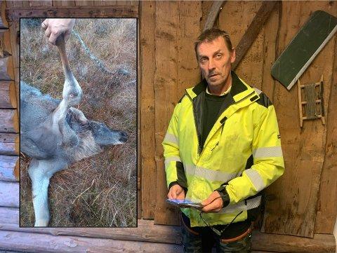 SINT: Elgjeger Tor Kristian Stugård forteller om sin verste opplevelse som jeger noen sinne. På bildet til venstre holder han frem benet som er gjennomhullet.