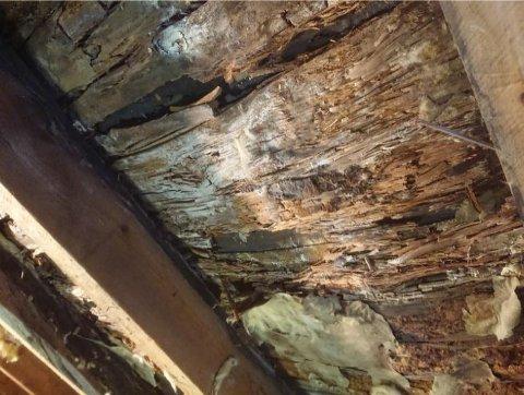 MUGG OG RÅTE: Slik så taket på loftstua ut etter at muggen hadde fått spre seg over en tidsperiode på 35 år. De nye kjøperne fikk ikke erstatning for skadene på sitt nykjøpte hus.