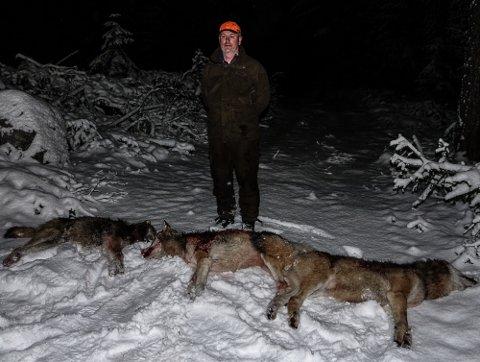 TRE FELT: – Disse tre ulvene ble felt første jaktdagen, og det skjedde slik det skulle, sier jaktleder Kristian Noer.