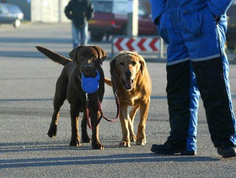– Det er populært å ha hund, men det stiller visse krav til eigaren, skriv kommunen på nettstaden sin.