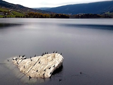 Skarv: Arnt Orskaug mener mellomskarven påvirker fiskefaunaen i blant annet Strandefjorden, og her er et bilde fra Helgasteinen mot Ulnes, tatt tidlig i denne uka.FOTO: Kjetil Rolseth
