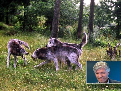 Nemnd: Det er udemokratisk om Ola Elvestuen overlater klagebehandling i rovdyrsaker til ei nemnd.