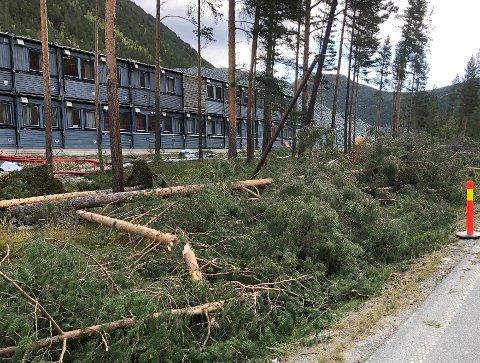 Lærdom: Høststormen tok firberkabelen på Lalm i 2018, og viste hvor sårbare vi er uten et alternativt nett.
