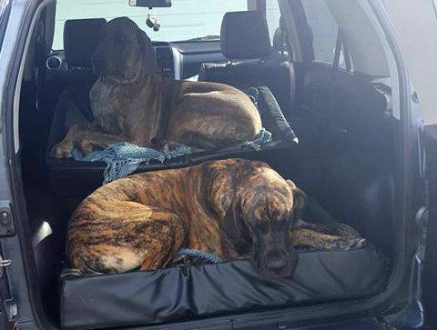 """Hanne Granheims hunder skal ha blitt solgt av fôrvertene. Hun søker fremdeles opplysninger om hannhunden """"Cash"""" (nærmest), mens """"Viljar"""" skal være lokalisert i Grimstad."""