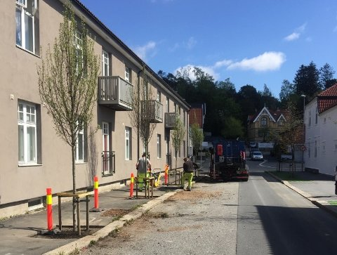 NYE TRÆR: Det er plantet nye trær i Balders gate i sentrum.