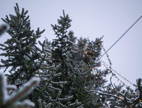 Julestemning: For mange blir det ikke skikkelig jul før treet er i hus, eller i andre tilfeller, hytte.