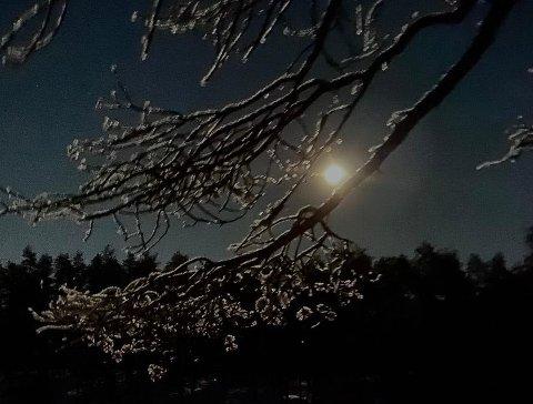 Skjerva løypelag arrangerer måneskinnstur