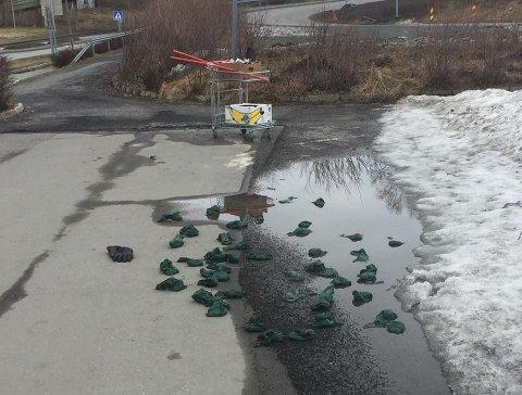 Sten Solvang har samlet nesten 100 poser med hundebæsj fra hekken utenfor Coop Extra på Halsøy. Han føler seg sikker på at posene stammer fra en og samme hundeeier.