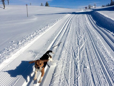 ULOVLIG: Nore og Uvdal kan ha gjort et ulovlig vedtak i forbindelse med båndtvang i skiløypene.