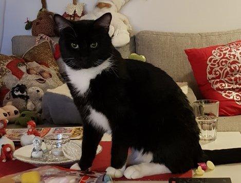 Har du sett denne katten i Berger-området?