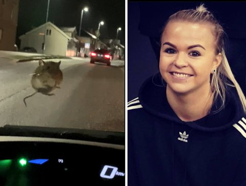 PIP! Kjøreturen tok en uventet vending for Marianne Løvdok da denne lille krabaten plutselig dukket opp på frontruta på bilen hennes.