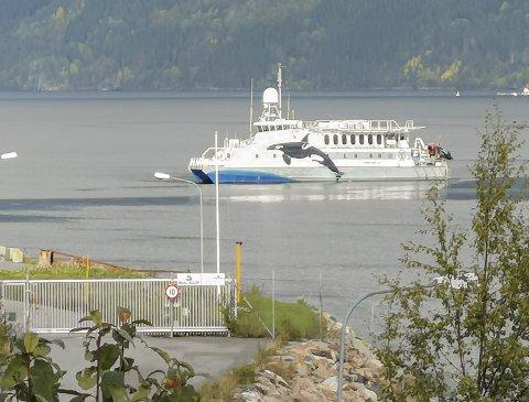 På Tingvollfjorden: «Miljødronningen» fotografert under sitt besøk for to uker siden.