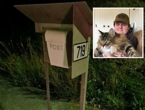 PÅKJØRT: Henrik Thomassen fant en død katt langs veien i Skotselv (for ordens skyld var det ikke katten som er avbildet).