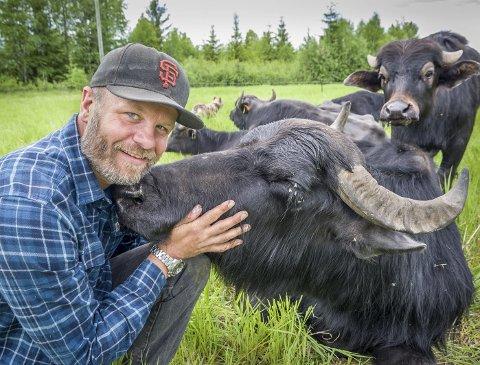 KOSETE: Noen av bøflene elsker å bli klådd og kost med og er like kjælne som en hund. Espen Hofsmo er den første som har importert vannbøfler til Norge.