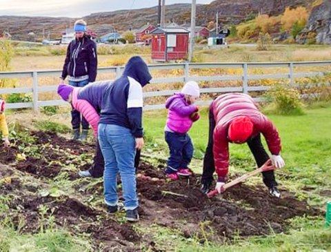 POTETDUGNAD: Det ble poteter i år igjen i Bugøynes. Tradisjontro fikk Bugøynes helselag hjelp av barnehage- og skolebarn i bygda da potetene skulle opp av bakken.