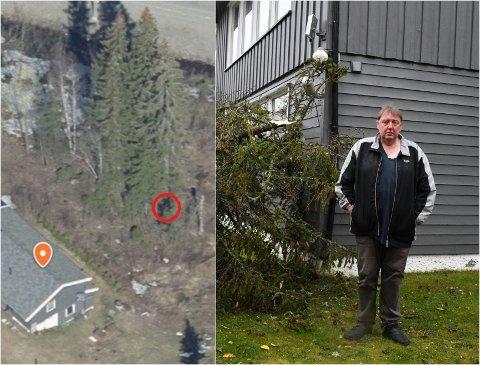 DRAMATISK: Dette store grantreet veltet over huset til Jørn Torleif Ringvold søndag morgen.
