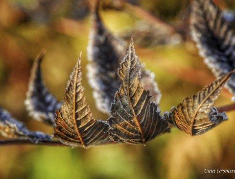 Vinner uke 40: Høsten gir mange god motiver. Fargene og linjene fra bladene gir bildet en fin rytme. Bra! Foto: Unni Gromsrud