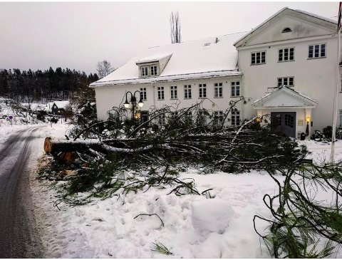 FALL: Et digert kjempetre på 30 meter falt over veien ved Sem gjestegård. Det meldes om trefall over hele Asker som en følge av våt og tung snø.