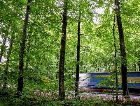 AREALPRESS: Skogene rundt Sandefjord by er utsatt for press fra flere kanter. Det er en av årsakene til at formannskapet nå vil kartlegge alle kommunens skoger for et mulig varig vern.