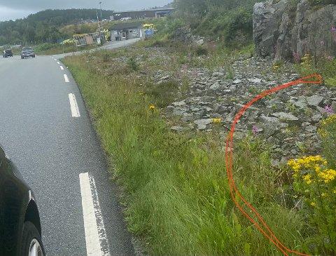 NORDMARKA: Den raude ringen viser landøyde som står i vegkanten like før IVAR sin gjenvinnigsstasjon i Nordmarka på Tau.