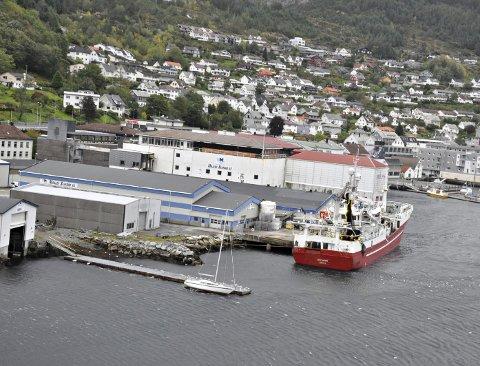 MÅLØY: Med bygginga av eit nytt fryselager (heilt til venstre i dette bildet) vert det ein gang så travle fiskerinabolaget i sørlege Måløy for alvor «gjenoppliva». Foto: Sindre Blålid Kvalheim