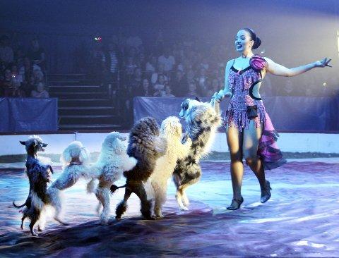 DRESSERTE: Sirkus Arnardo har ikke lenger de store dyrene, men Laura Urunova viste hva de små kan  gjøre.BILDER: SIGMUND FOSSEN