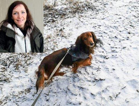 STILLE: Ann Kristin Forsmo savner den hektiske tiden da mange trengte hundepass.