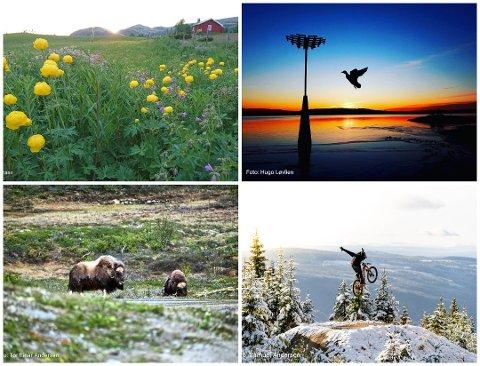 NÅ KAN DU STEMME: Bildene over er bare fire av mange bilder som er sendt inn i juni. Nå kan du stemme over hvilke 24 du synest er finest. Foto: Bodil Bomann/Hugo Løvlien/Samuel Andersen/Tor Einar Andersen