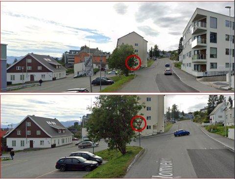 TRAFIKKFARE: Vikepliktskiltet i krysset ved Mellomvegen – Jens Olsens gate er knapt synlig bak treet.