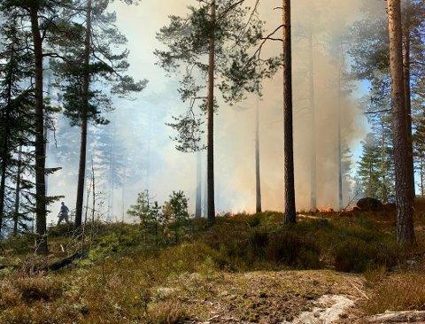 SKOGBRANN: Det brenner ved Rundvann, et område på omtrent 100x100 meter, søndag ettermiddag. Brannvesenet ber folk trekke seg unna.