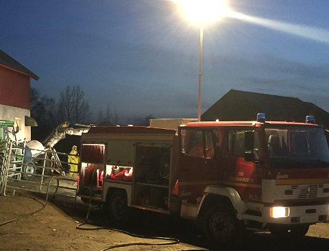 DYRETRAGEDIE: Ti ungdyr av storfe er bekreftet døde etter at et fjøsgulv kollapset på en gard i Os.