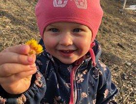 Olianne, som fyller tre år i mai, plukket mest hoder, da hun denne uken fant hestehov på Vik i Hole.