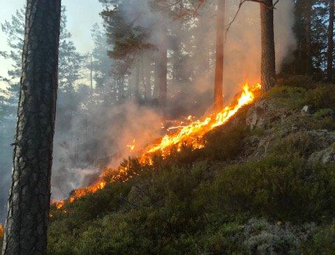 FULL FYR: Mandag ettermiddag begynte det å brenne i et skogområde på kommunegrensa mellom Lørenskog og Rælingen. Tirsdag ettermiddag jobber brannvesenet fortsatt på stedet.