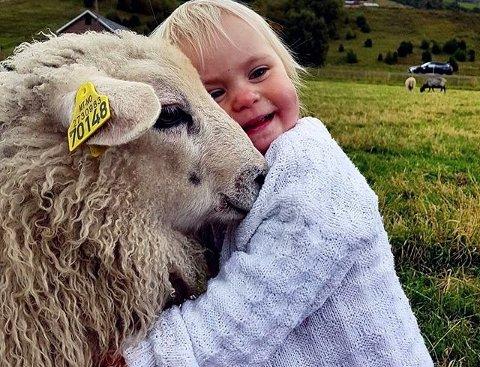 VINNERBILDET: Lille Victoria som æ sååå glad i dyr. En saue-kos slår aldri feil. #gdbilder #høst #kopplam #dyrevenn. Foto: Ann Helen Holum