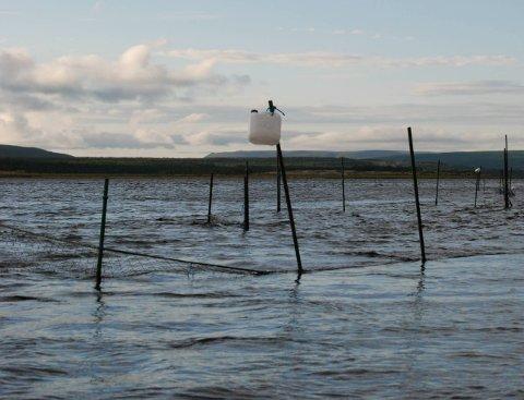KAN FORSVINNE: Hvis ikke den famøse regelen om maskevidde endres, er det stor sannsynlighet for at de få som fortsatt fisker med stengsel, må slutte.Foto: Alf Helge Jensen
