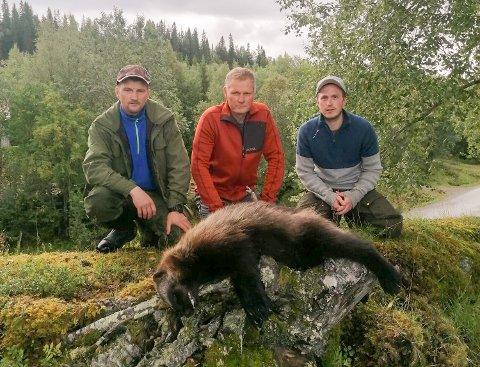 12 av Joakim Hovds lam er drept av jerv. Onsdag ble det skutt en hannjerv i samme område. På bildet ser du Jonar Hansen (fra venstre), Geir Snefjellå og Joakim Hovd. Det var Jonar Hansen som skjøt rovdyret. Snefjellå er leder i det kommunale skadefellingslaget.