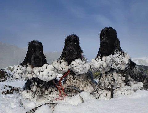 EN DÅRLIG MIKS: Karla, Lily og Simon oppdaget i helgen at våt pels og nysnø ikke er den beste miksen.