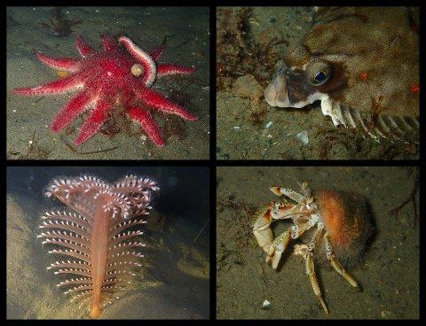 YRENDE LIV: Dykker i Moss Undervannsklubb, Runa Lutnæs, tok fredag disse bildene like utenfor Larkollen.