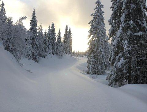 Dette bildet ble tatt i Vestskauen i januar. Siden den gangen har det kommet mye mer snø.