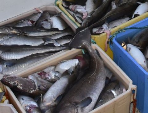 VANT FRAM: Fiskebåtrederiet vant fram og slapp inndragning.